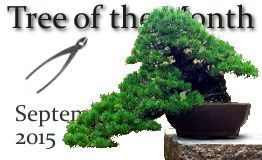 September 2015 Tree of the Month