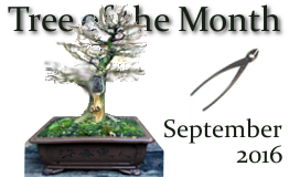 September 2016 Tree of the Month